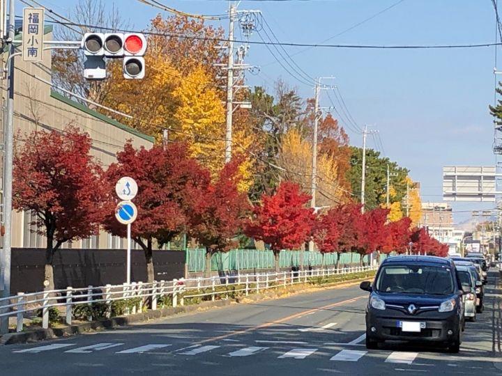 街路樹の紅葉【豊橋市大崎街道】ワクワクブログ