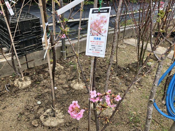 春【ガーデンガーデン】ワクワクブログ