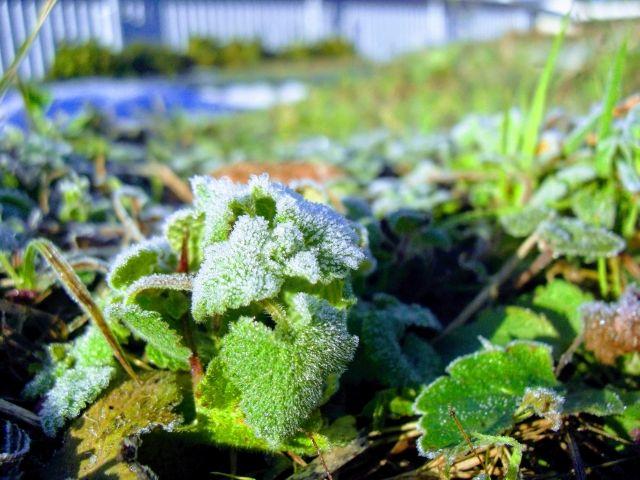 霜が降り始める頃【霜降】二十四節気