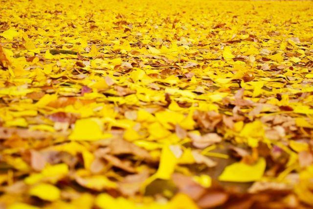 木枯らしが吹く季節です。【立冬】二十四節気