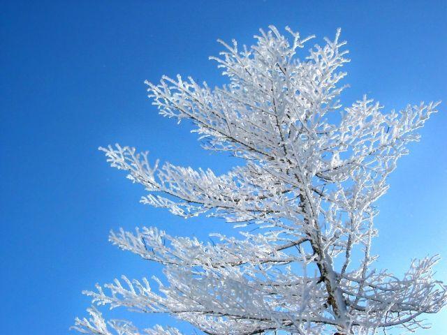 寒さが最も厳しい時期です。【大寒】二十四節気